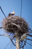 Bird nest with stork Royalty Free Stock Image