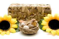 Bird nest and sunflower before phloem basket Royalty Free Stock Photo