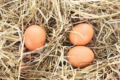 Bird nest with three eggs Royalty Free Stock Image