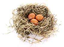 Bird nest with three eggs isolated Royalty Free Stock Images