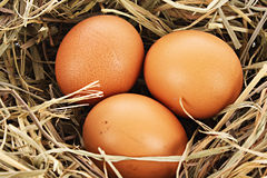 Bird nest with three eggs isolated Stock Photos