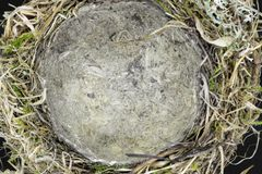 Bird nest. Top view of bird nest made from grass, moss, leaves and branches on black background. Center of the nest is in camera focus stock photos