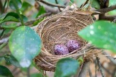 Bird nest on tree branch Royalty Free Stock Photo