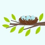 Bird nest. On the tree branch. Vector illustration royalty free illustration