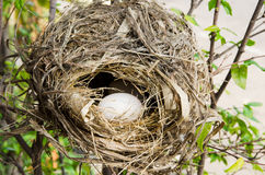 bird nest on tree branch with white eggs inside Stock Photos