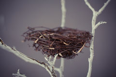 Bird nest on a tree Royalty Free Stock Photography