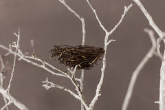 Bird nest on a tree Stock Image
