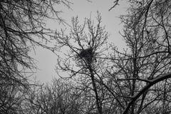 Bird nest on the tree Royalty Free Stock Photo