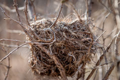 Bird Nest. A bird nest in a tree in early spring Royalty Free Stock Images