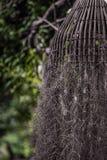 Bird Nest Tree. Focused Bird Nest Tree with long root on hanging Stock Image