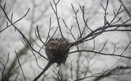 Bird nest on tree limb Stock Images
