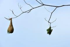 Bird Nest on a tree Royalty Free Stock Photo