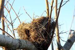 Bird nest in the tree Royalty Free Stock Photography