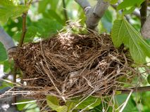 A bird nest in a tree in spring Royalty Free Stock Photos