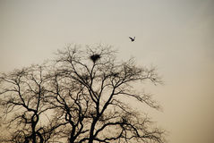 Bird nest in trees Royalty Free Stock Images