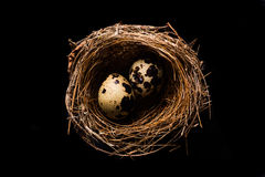 Bird nest with two eggs Royalty Free Stock Photos