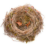 Bird-nest vacío Foto de archivo libre de regalías