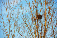 Bird nest on white branches with sunshine and blue sky Stock Images