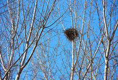 Bird nest on white branches with sunshine and blue sky Royalty Free Stock Photography