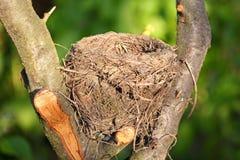 Bird nest in wild Royalty Free Stock Photos