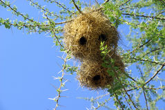Bird nest in the wild Stock Photos