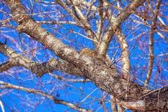 Bird Nest at Winter Tree Royalty Free Stock Photography