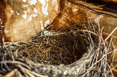 Bird nest. With wood in background stock images