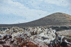 Bird nesting area at Ballestas-island Stock Photography
