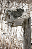 Bird nesting box covered in ice after an ice storm Stock Photography
