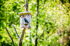 Bird and nesting box Stock Photos