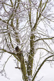 Bird nesting box on tree covered by snow - vertical Royalty Free Stock Photo