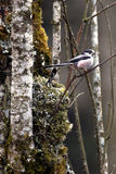 A bird nesting in the forest. Royalty Free Stock Photos