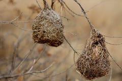 Bird Nesting Stock Photo