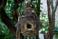 Bird Nests Royalty Free Stock Images