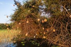 Bird Nests Dozens Water stock photo
