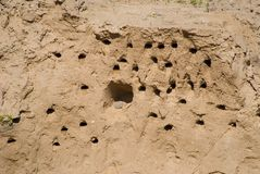 Bird nests in the ground wall Royalty Free Stock Images