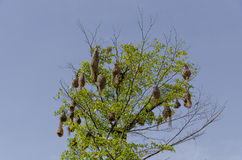 Bird nests Stock Photography