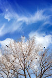 Bird nests on trees Royalty Free Stock Photos