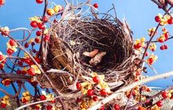 Bird next Royalty Free Stock Image