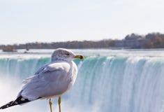 Bird at Niagara Falls Royalty Free Stock Photo