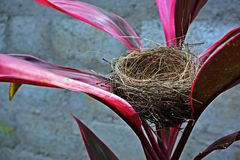 Bird& x27; nido di s Fotografie Stock
