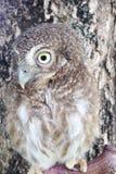 Bird of night Stock Images