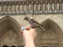 Bird on notre dame Royalty Free Stock Image