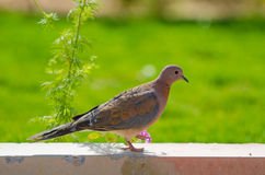 Bird in the oasis Royalty Free Stock Photography