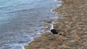 Bird and ocean stock image