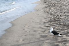 Bird and ocean royalty free stock photo