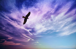 Free Bird Of Prey Fly In Blue Cloudy Sky Royalty Free Stock Image - 29045326