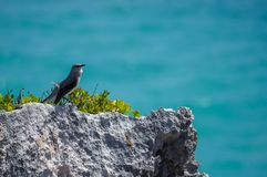 Bird in old Mayan site in Tulum, Mexico royalty free stock photo