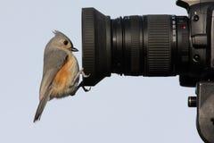Free Bird On A Camera Royalty Free Stock Image - 5694756