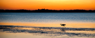 Free Bird On Beach At Sunset Royalty Free Stock Image - 25828576